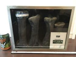 Alien Legacy Actual Size Tail Parts Of Alien 4 Movie Prop Collectibles