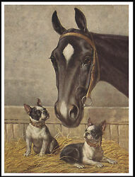 BOSTON TERRIER DOGS AND HORSE IN STABLE LOVELY VINTAGE STYLE DOG PRINT POSTER