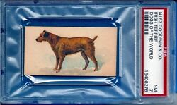 1890 N163 Goodwin & Co. Dogs of the World Irish Terrier Psa 7