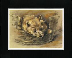 CAIRN TERRIER IN A BASKET VINTAGE STYLE DOG ART PRINT MATTED READY TO FRAME