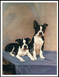 BOSTON TERRIER TWO DOGS LOVELY VINTAGE STYLE DOG PRINT POSTER
