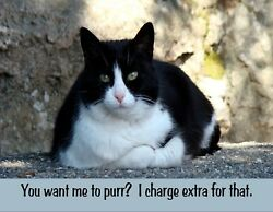 METAL REFRIGERATOR MAGNET Want Me To Purr Charge Extra For That Cat Humor