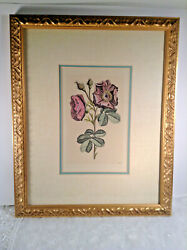 Antique Style French Rose Drawing Gold Colored And Matted Framed Print Beautiful
