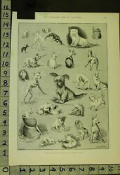 1890 DOG CANINE TERRIER CLUB SHOW YORKSHIRE CLYDESDALE LOUIS WAIN PRINT RT39