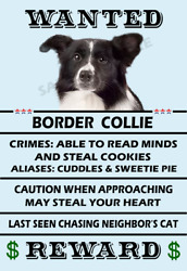 Border Collie Dog Wanted Poster Flex Fridge Magnet 4x6 inches