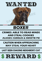 Boxer Dog Wanted Poster Flex Fridge Magnet 4x6 inch