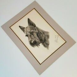 Giant Schnauzer Picture Charcoal Drawing Portrait Signed Dogs Vintage 1981 Large