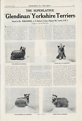 Old 1934 Our Dogs Yorkshire Terrier Dog Breed Kennel Advert Print Page B181