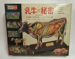 Marusan Dairy Cow Secret Vintage Educational Plamodel With Box From Japan Rare