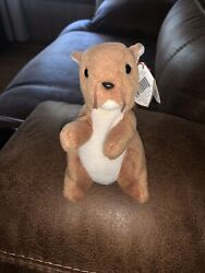Retired Original Ty Beanie Baby Nuts The Squirrel W/ Face And Tag Errors Rare Pvc