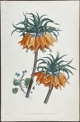 Prevost - Crown Imperial Lily. 34, 1805 Collection Hand-colored Engraving