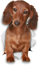 Winston And Bear 3d Dog Stickers - 2 Pack - Long Haired Brown Dachshund Stickers -