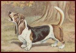 BASSET HOUND Howling by Edwin Megargee MATTED vintage print 1958