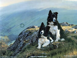 Steven Townsend END OF A WORKING DAY Border Collies