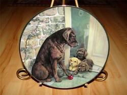 Chocolate Labrador Dog, Yellow Lab Puppies, Ruane Manning, On The Ball Plate