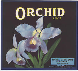 Original Orchid Flower 1930and039s Claremont Orange Crate Label Not A Copy
