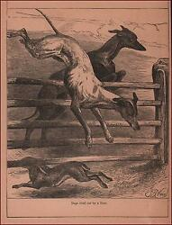 RABBIT Tires Out GREYHOUND DOGS in Chase by Weir antique engraving 1886