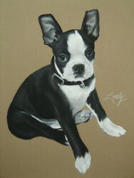 Original Boston Terrier Pet Dog Portrait Drawing by Artist Daniel Lovely