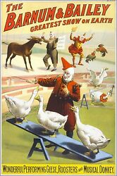 Poster, Many Sizes Barnum And Bailey Circus Clowns And Geese
