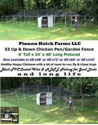 Chicken Run Pen Cage 6' Tall 25' 50' 75' 100' Poultry Coop Garden Fence Metal