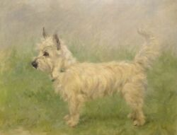 Large Early 20th Century Scottie West Highland terrier Dog Portrait Antique