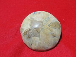 SAND DOLLAR TYPE SEA FOSSIL FOR DISPLAY A241 243 $7.50