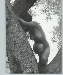 1965 Peter Basch Nude Female Breasts Hide And Go Seek In A Tree Photo Gravure