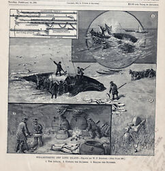 New York Whaling Whalers Whale Fishing Maritime Antique Art Print 1885