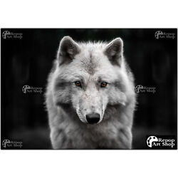 Close-up Of Young Polar Wolf - Animal Poster W/ Variations