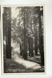 Real Photo Postcard Laneand039s Redwood Flat On Redwood Highway Ca A120