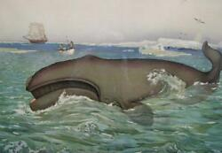 Antique Print Whale Arctic Whaling Large Framed