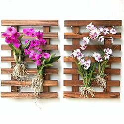 Wall Planters – 2 Pack Wooden Orchid Planter Frame Display Hanging Wall Plant...