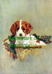 Vintage Art~Cute Basset Hound Puppy Dog in Basket~NEW Large Note Cards