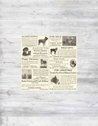 Antique '14 BOSTON TERRIER Dog Breeder Kennel Puppy AKC French Bulldog Photo Ads