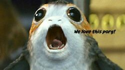 Star Wars Porg Collectible Plush Free Shipping Porg Is Adorable
