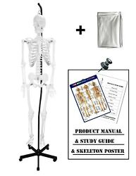 Vision Scientific Vas201-h-dc Hanging Full Size Human Skeleton-66andrdquo 168cm