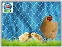 Poultry Nets 50and039 Game Birds Ducks Chicken Protective Plant Aviary 4 Nylon Net