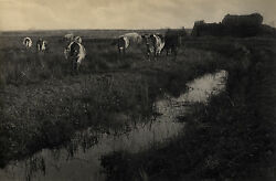 Peter Henry Emerson Cattle On The Marshes 1886 / Vintage Platinum Print