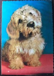 Vintage Postcard This Breed Is Traced To 1704 And A Band Of Scottish Gypsies