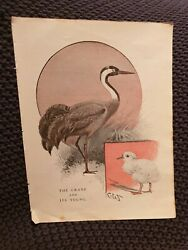 The Crane And Itand039s Young - Antique Book Print