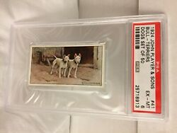 1924 John Player & Sons Bull Terriers Pit Dogs Card #41 PSA 6 POP 1 NO high