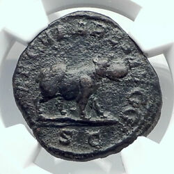 Otacilia Severa Rome 1000 Years Games At Colosseum Roman Coin Hippo Ngc I80954
