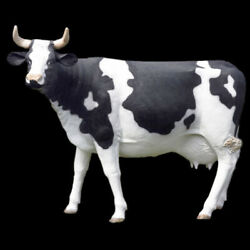 Cow Sculpture Statue Life-size For Home Or Garden