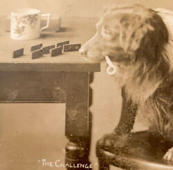 Antique Dog Postcard Rppc Plays Dominoes Game Smoking Pipe Signed