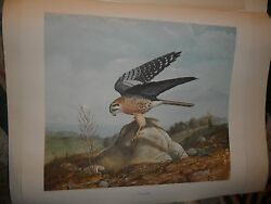 Ray Harm Kestral On Rock-110 Of 1000-mint Condition - Must See -beautiful Print