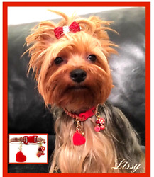Collars For Small Pets. Cats And Dogs Collars Puppy.a Jewels For Your Pets
