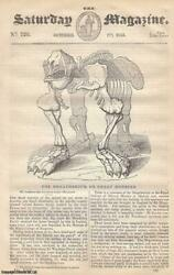 The Megatherium Or Great Monster Plant-like Animals Part 5 Some Account Of A