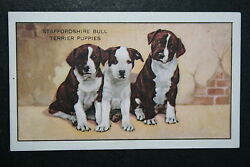 Staffordshire Bull Terrier Puppies Original 1930#x27;s Vintage Illustrated Card