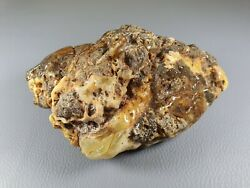 Baltic Amber Fossil Rock Stones Mineral Kahraman St1