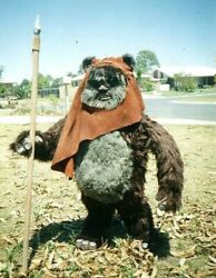 Star Wars Empire Strikes Back Life Size Ewok All Designs Quality Statue Prop